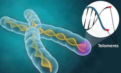 telomeres102